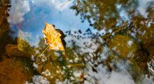Leaf Reflections