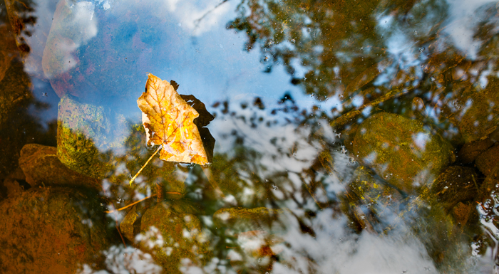 leaf-reflections