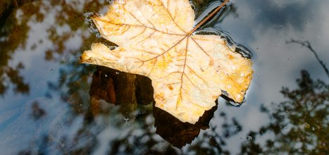 Leaf and Bubble