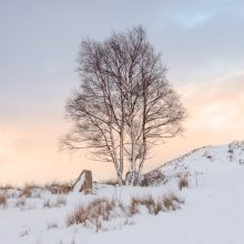 Rannoch Tree Sunset Square
