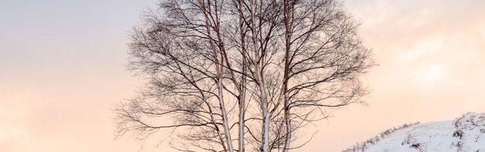 Rannoch Tree Sunset Square