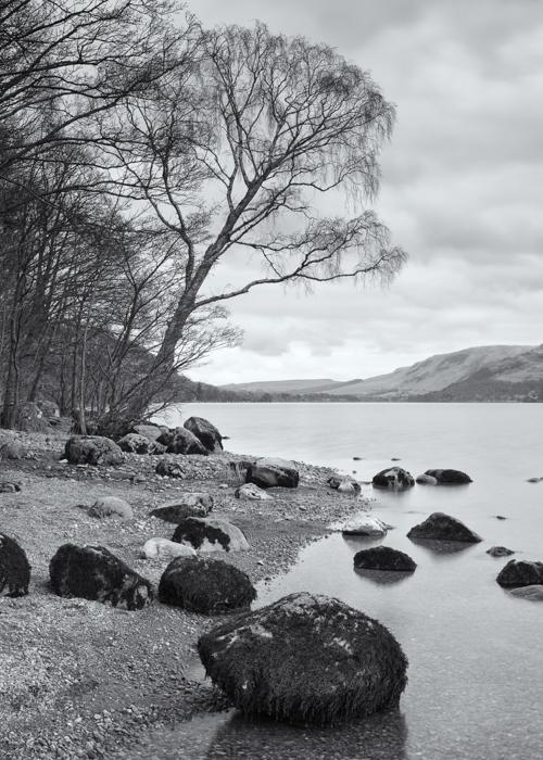 shoreline-tree-1