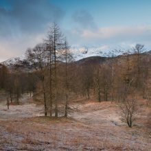 The Holme Fell Four