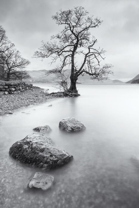 ullswater-tree