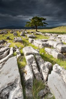 Winskill Stones and Tree