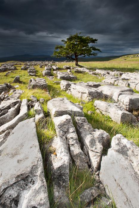 winskill-stones-and-tree