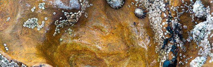 Rock Pool Detail