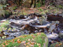 Running Water, Fallen Leaves