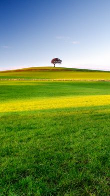 The Tree on the Hill