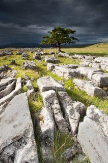 Winskill Stones and Tree